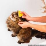 quanto custa banho e tosa gato Jardim Miragaia