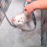 serviço de banho e tosa gato Vila Vessoni